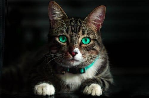 负债养猫的年轻人,到底在想什么?