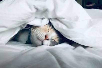 我就中午睡个觉,工作怎么丢了?