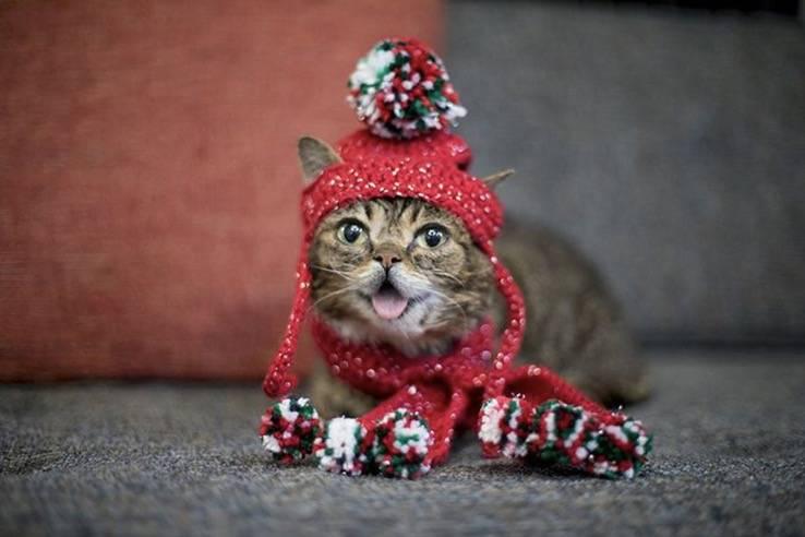 网红猫咪Lil Bub去世了