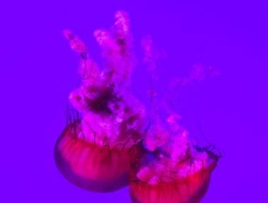 视频网站的花式割韭菜大法